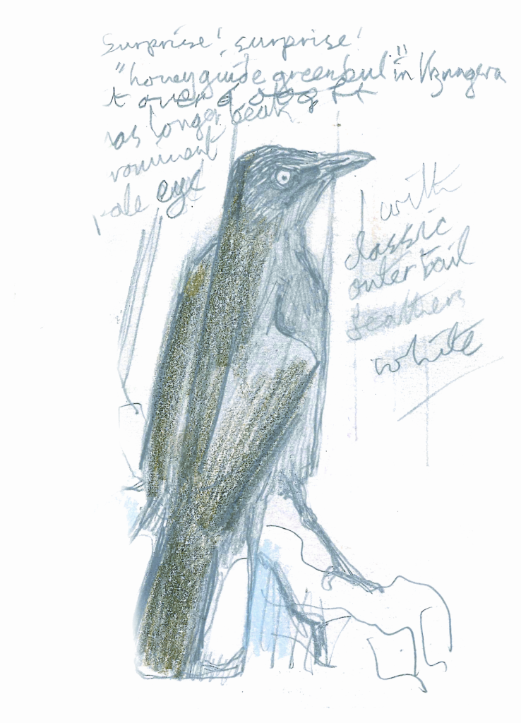 corvo-schizzo-kingdon