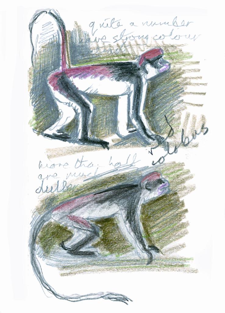 scimmia-schizzo-kingdon