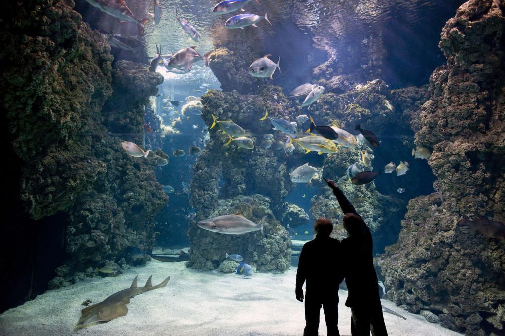 museo-oceanografico-monaco
