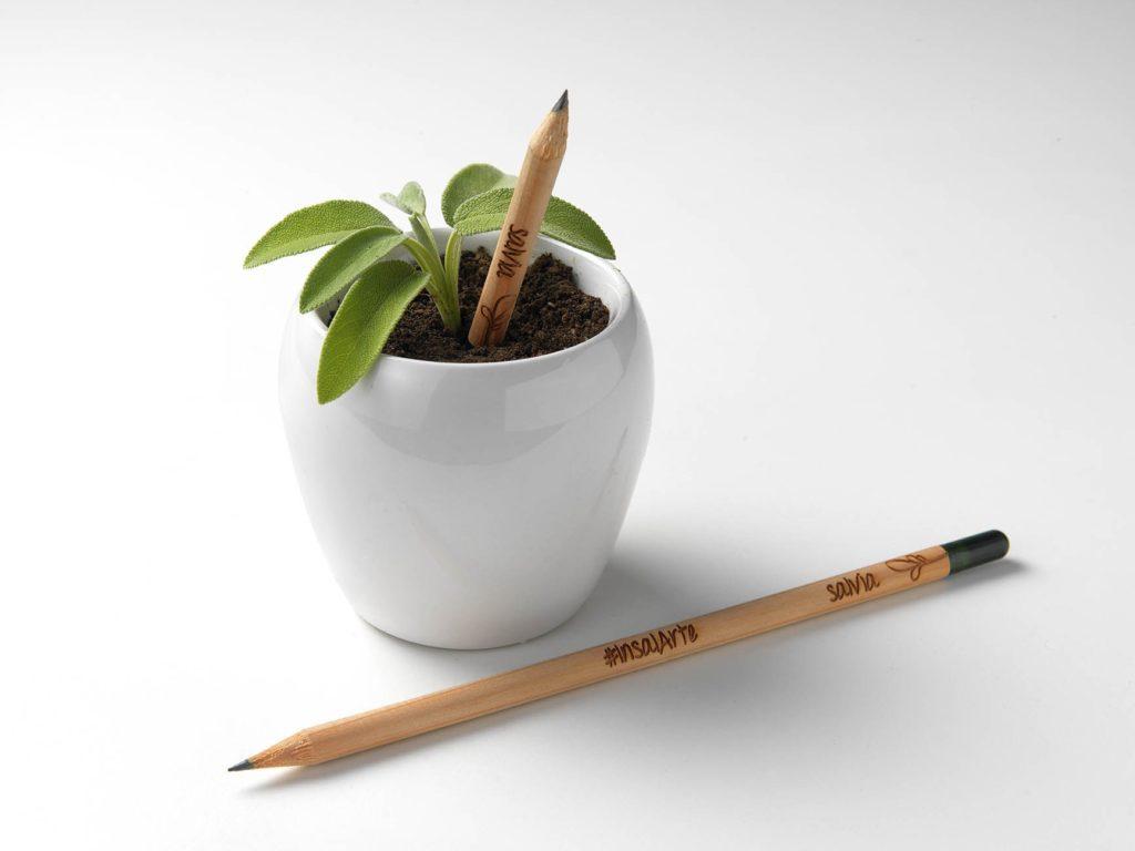 matita sprout che pianti e cresce una pianta