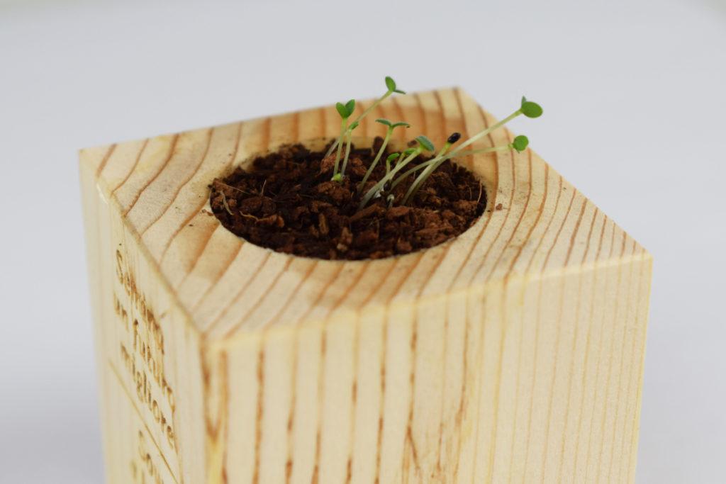 Gadget sostenibile da piantare