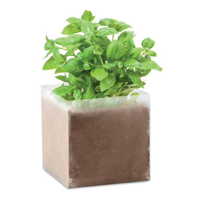 pianta di basilico trend gadget