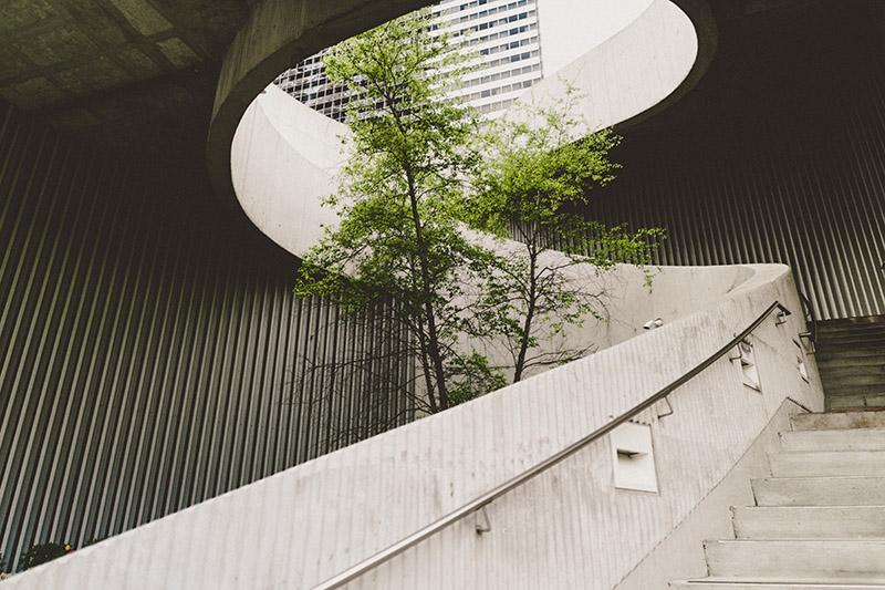 albero in mezzo a una scala di cemento