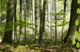 pianta un albero nel bosco di Sadesign