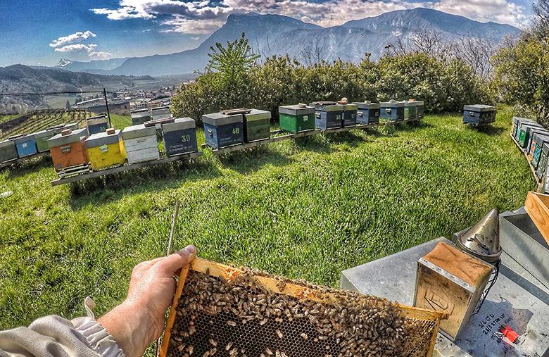 Foto apicoltore con api e arnia sullo sfondo come immagine del progetto Adotta un'arnia