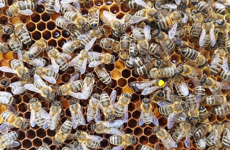 api su alveare in primo piano
