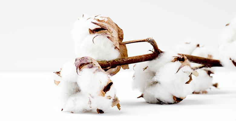 ramo di cotone
